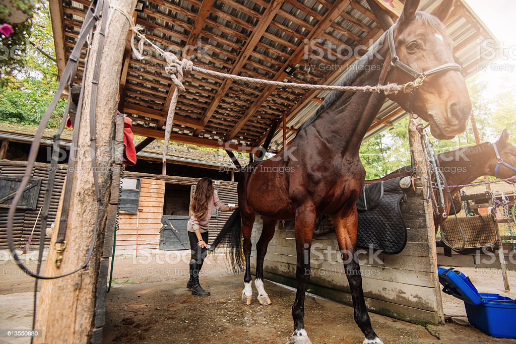 Brushing horse tail in stable stock photo