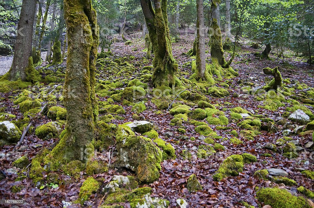 Brushwood stock photo