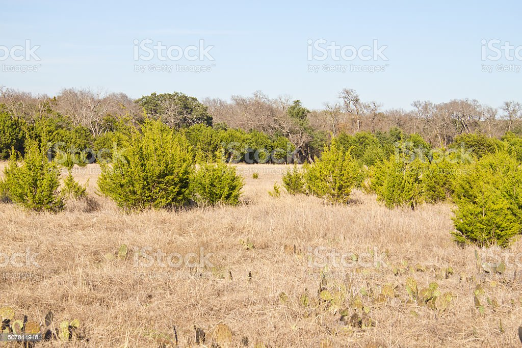 Brushy Creek Regional Trail stock photo