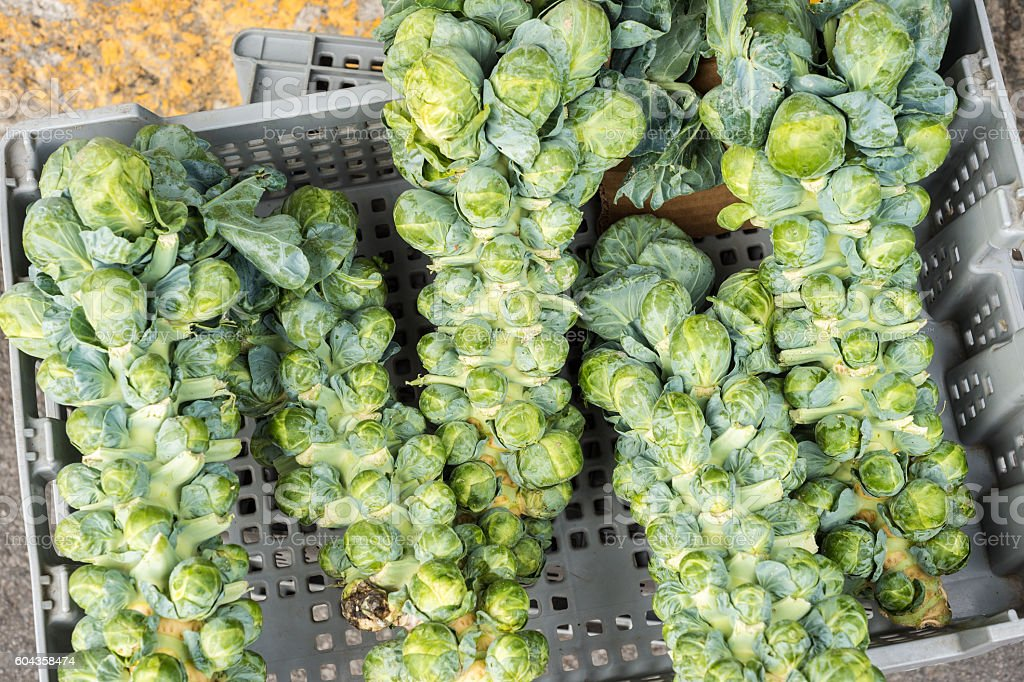 Brussel sprout stalks at the local market stock photo