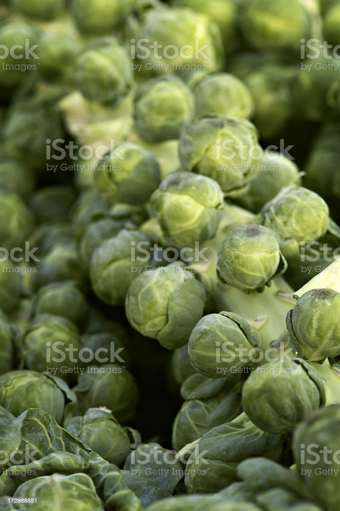 Choux de Bruxelles / Brussels Sprout royalty-free stock photo
