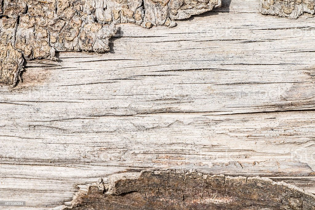 Brut wood tree trunk texture with bark and copy space stock photo