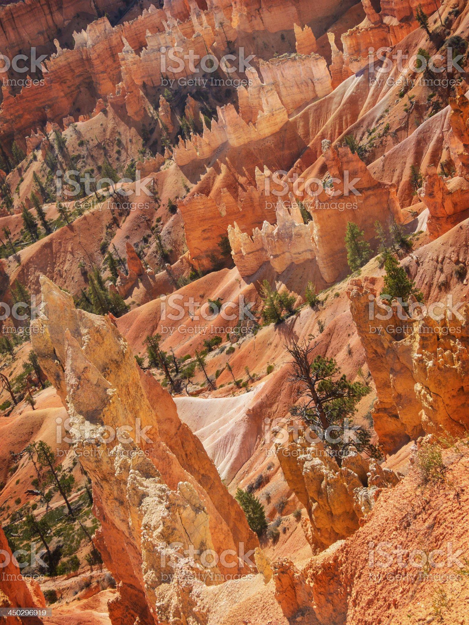 Bryce Canyon Floor Closeup royalty-free stock photo