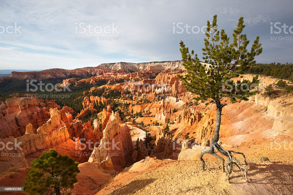 Bryce Canyon National Park : Amphitheatre with tree royalty-free stock photo