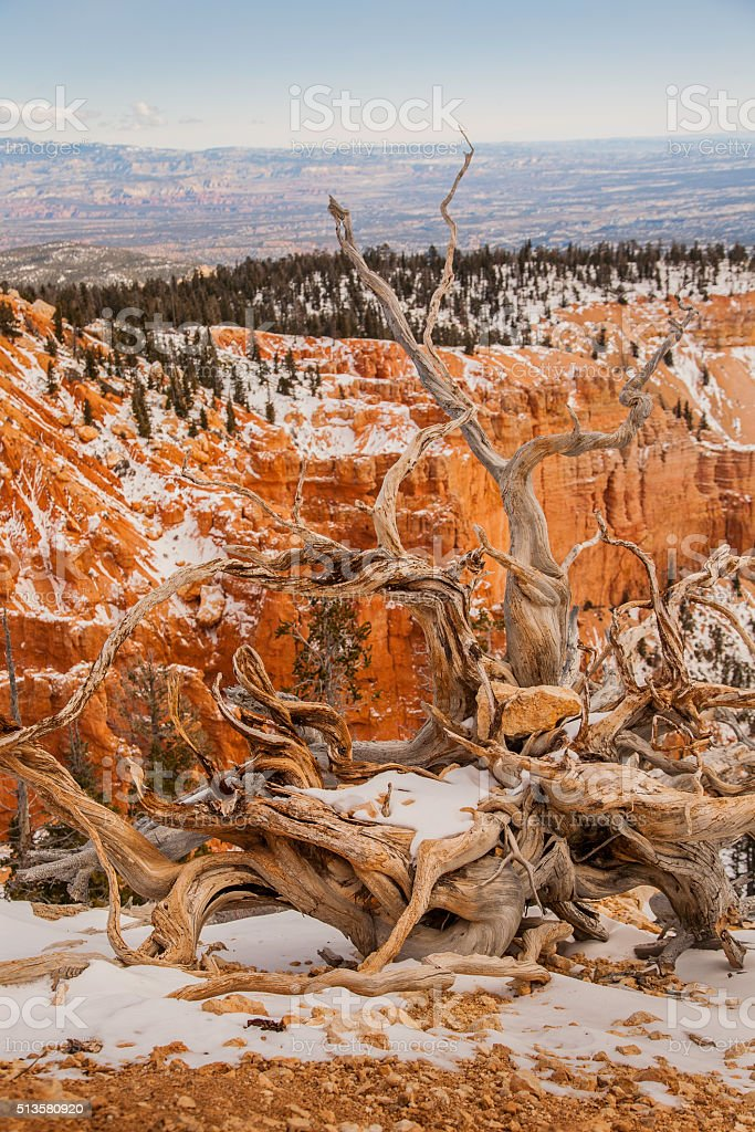 Bryce Canyon National Park Landscape in Winter stock photo