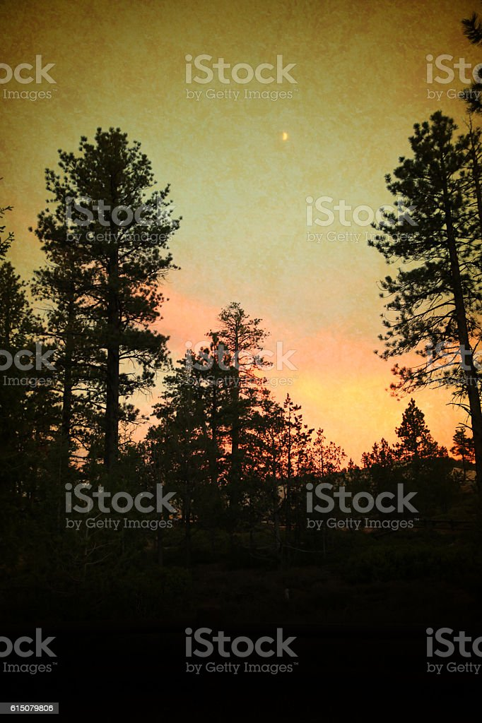 Bryce Canyon National Park Pine Trees and Stars at Sunset stock photo