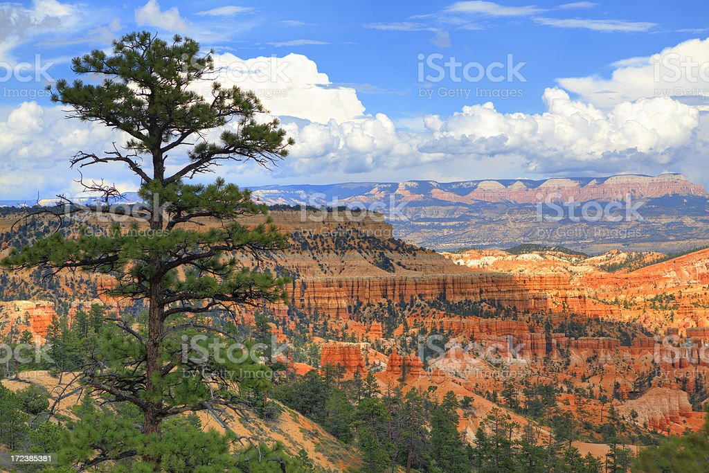 Bryce Canyon National Park, Utah royalty-free stock photo