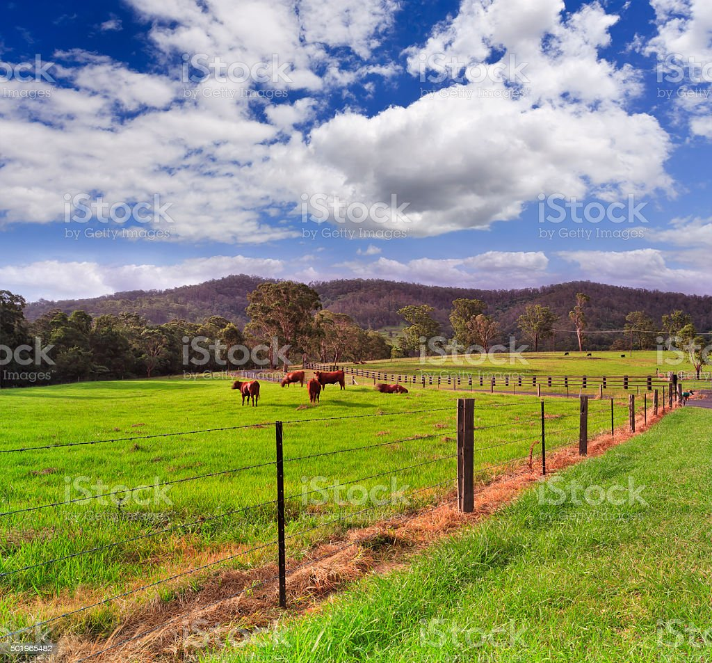 BTops Farm Cattle Wire Fence stock photo