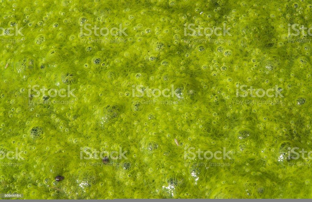 bubbly algae slime royalty-free stock photo