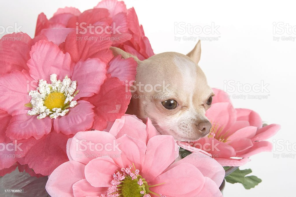 buch of flowers royalty-free stock photo
