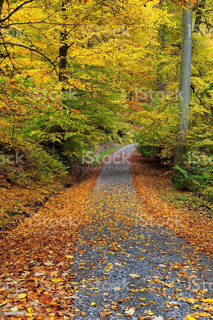 Buchenwald im Herbst stock photo
