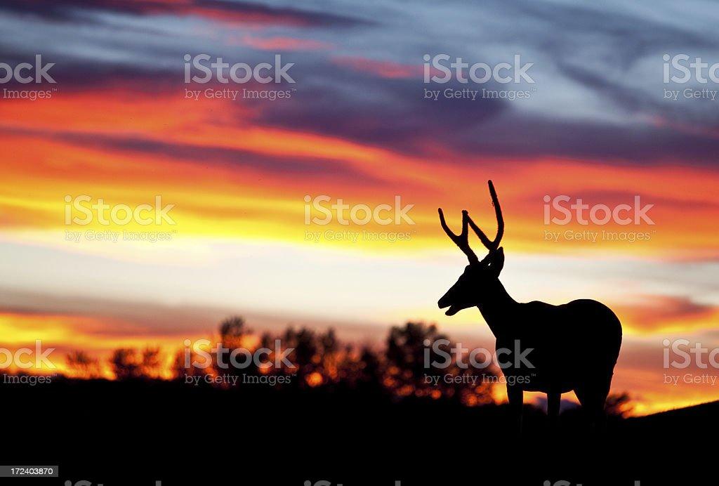 Buck Silhouette royalty-free stock photo