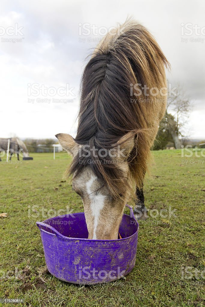 Bucket feed. royalty-free stock photo