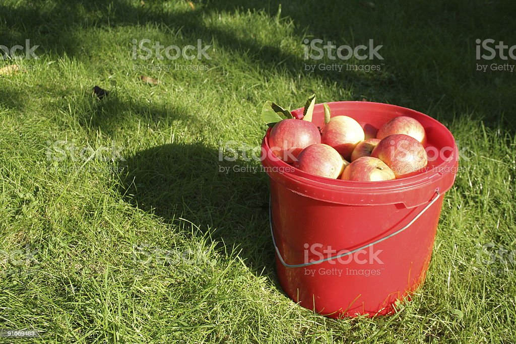 Bucket full of apples stock photo