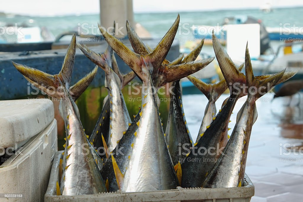 Bucket full of fishes stock photo