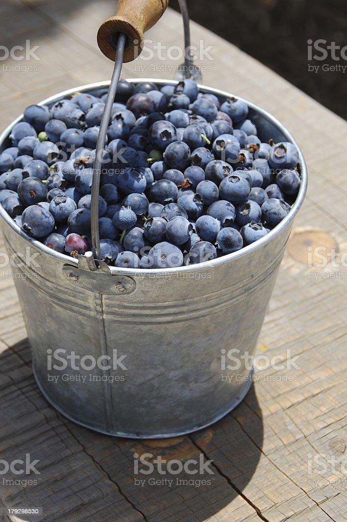Bucket O' Blueberries royalty-free stock photo
