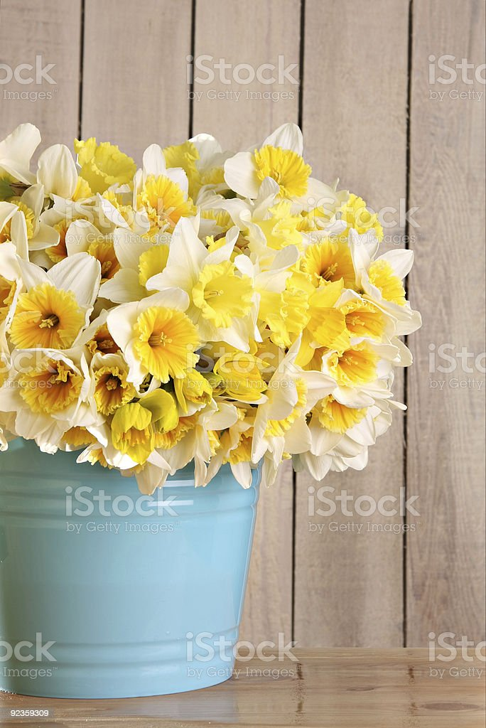 Bucket of Daffodils royalty-free stock photo
