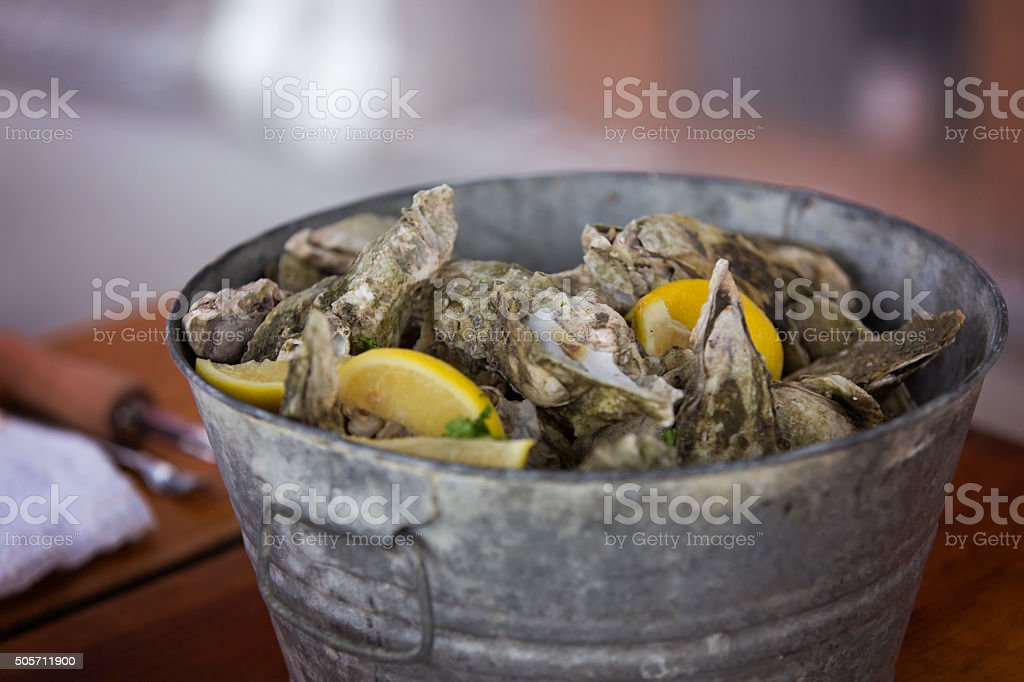 Bucket of Oysters stock photo