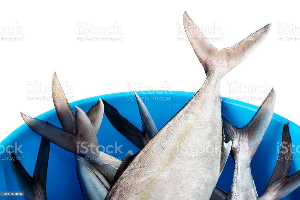 Bucket with fresh fish stock photo