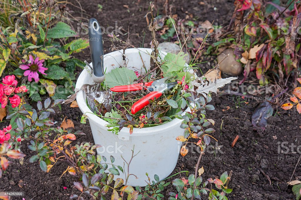 Bucket with garden tools and garden waste stock photo
