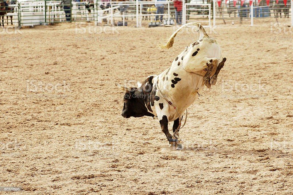bucking bull 1 royalty-free stock photo
