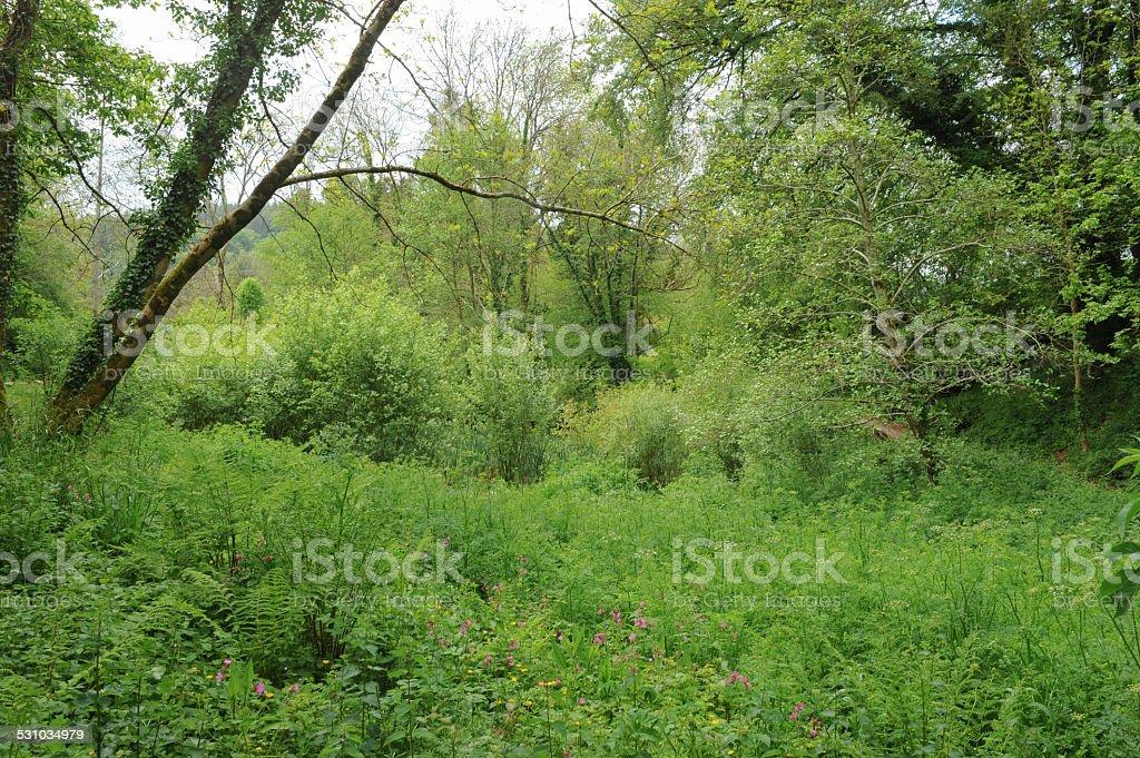 Buckland Abbey Estate, near Plymouth, Devon, England, UK stock photo