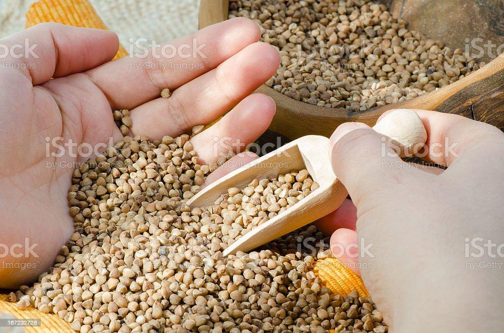 Buckwheat Groats royalty-free stock photo