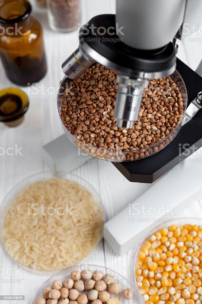 buckwheat in petri dish for analysis on wooden background stock photo