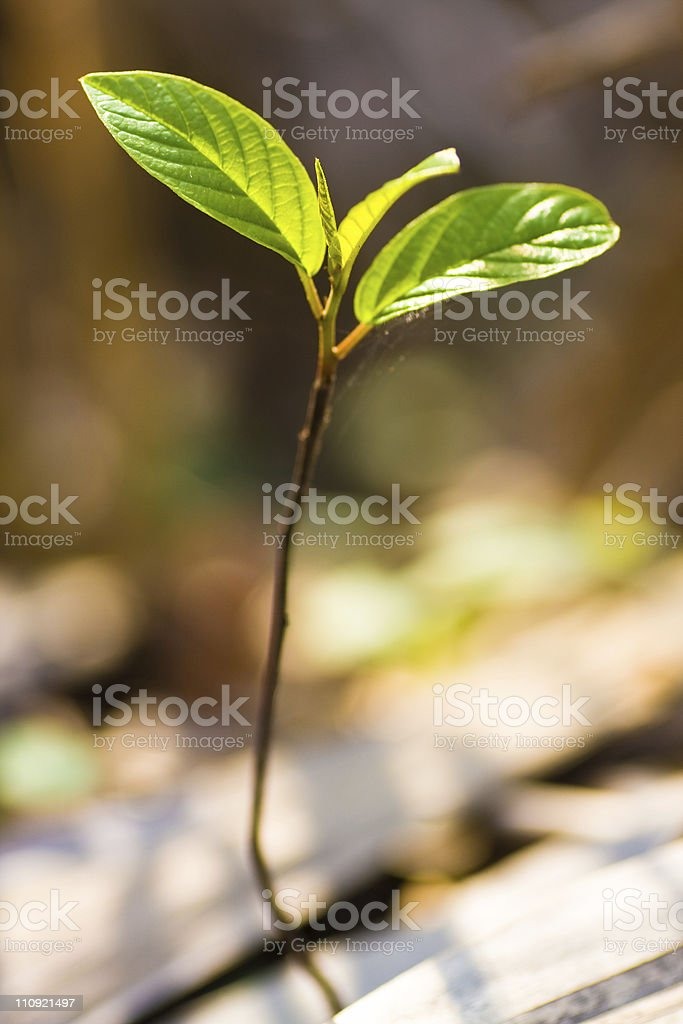 Bud, small tree stock photo