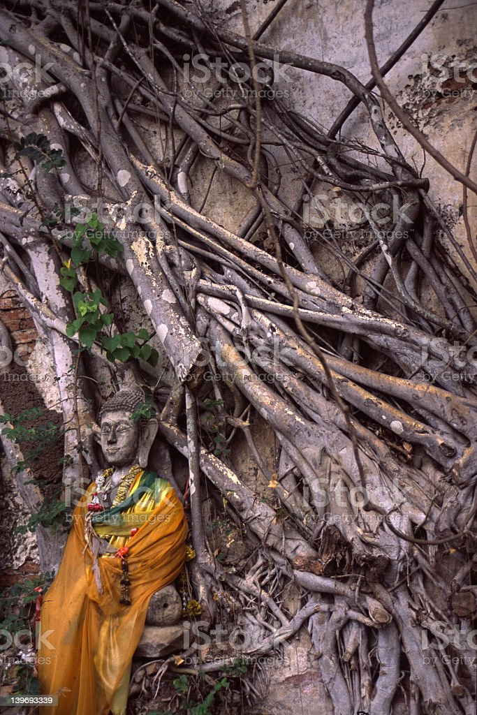 Buddha among jungle vines royalty-free stock photo