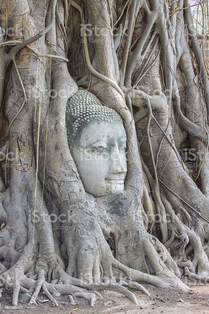 Buddha and nature stock photo