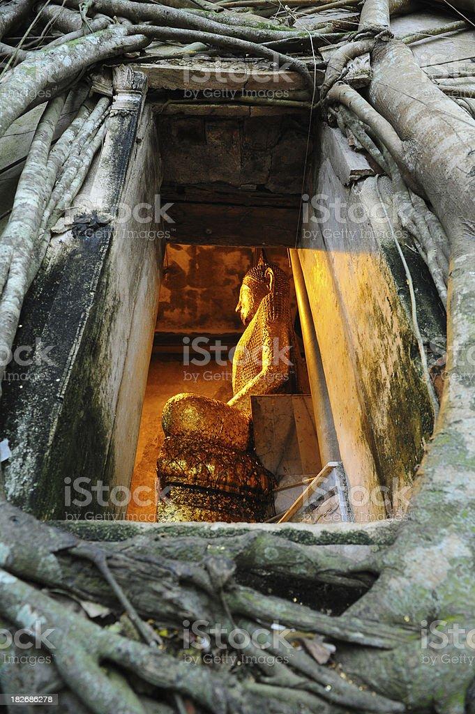 buddha behind the tree window royalty-free stock photo