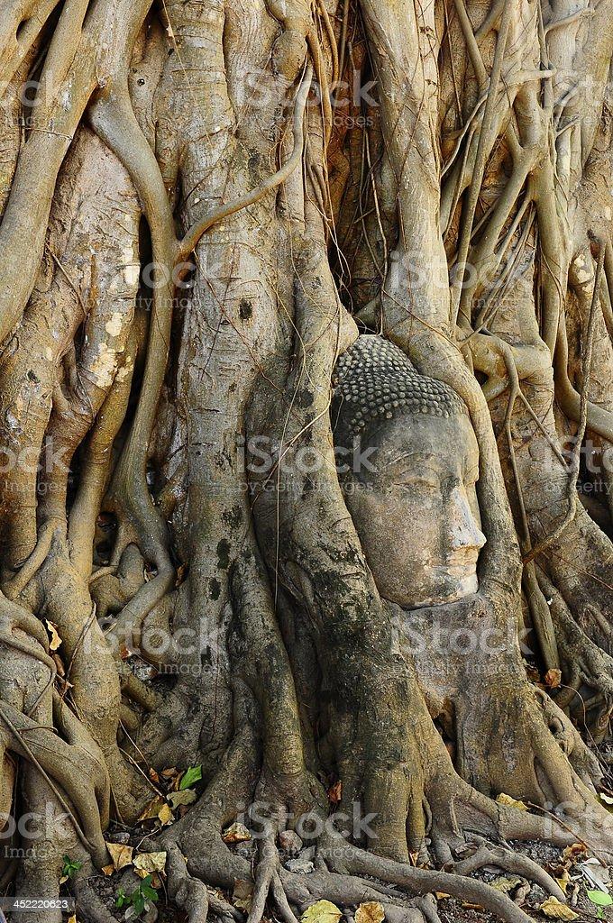Buddha face in root at Wat Mahathat royalty-free stock photo