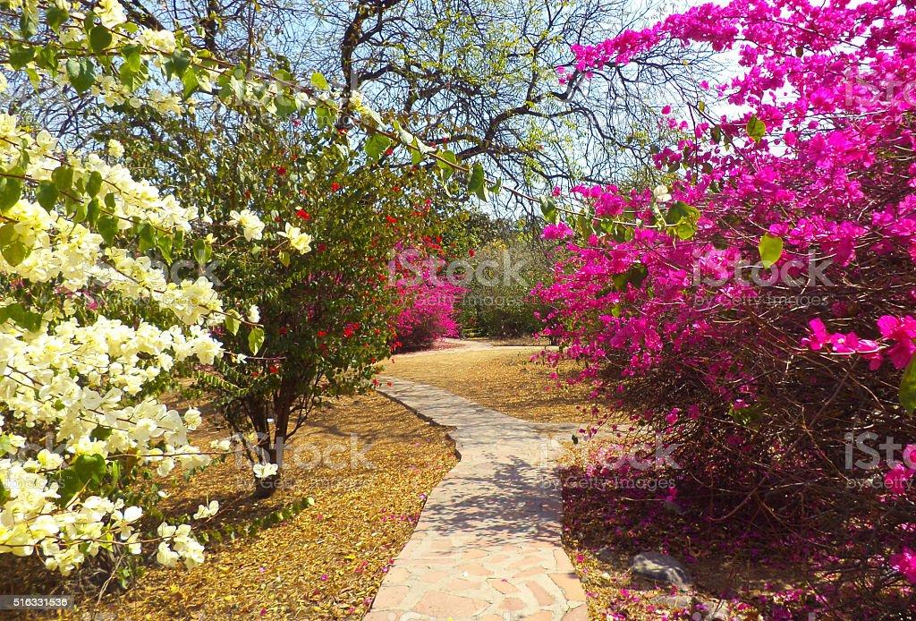Buddha Garden, New Delhi, India stock photo