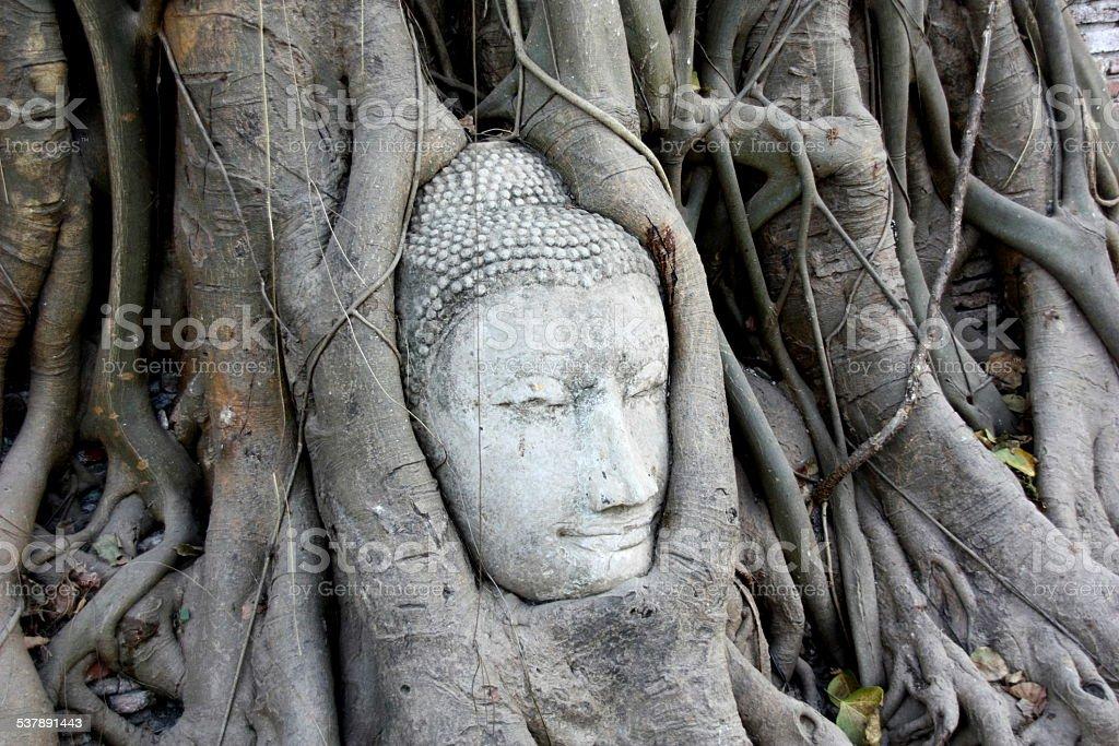 Cabeça de Buda coberto pelas raízes de foto de stock royalty-free