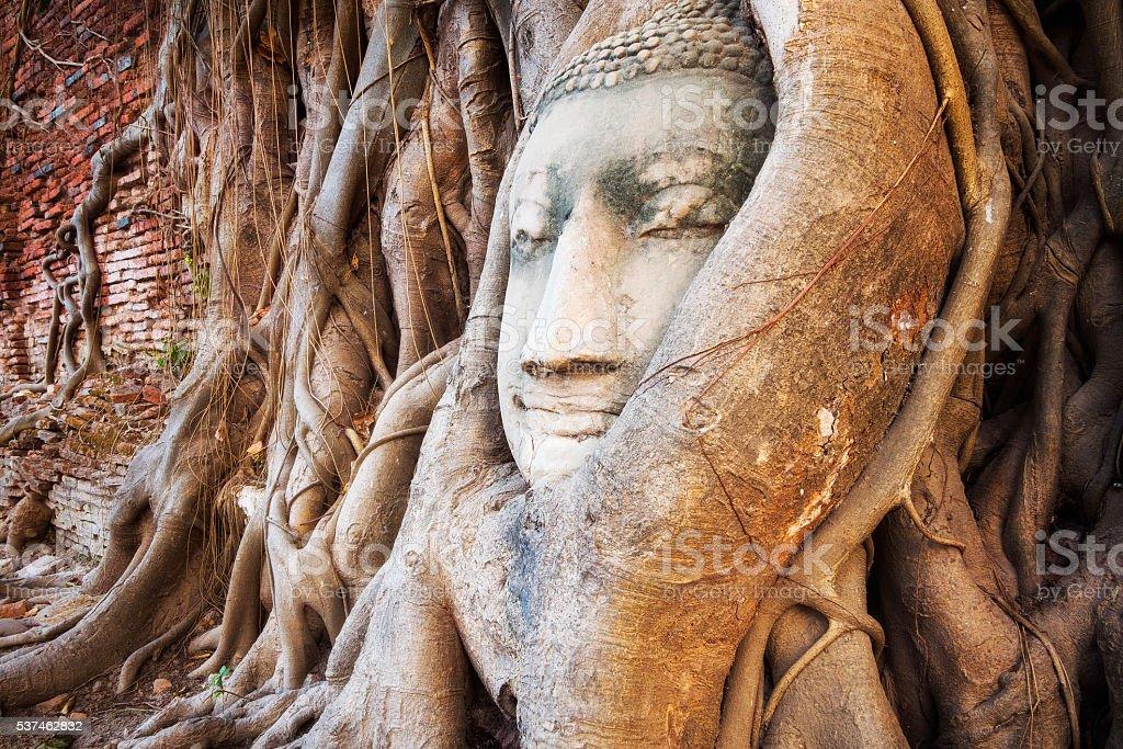 Buddha Head in the Tree Trunk, Ayutthaya, Thailand stock photo