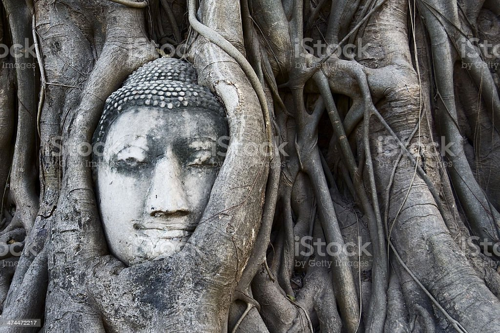 Buddha head in tree roots amongst Ayutthaya temple ruins stock photo