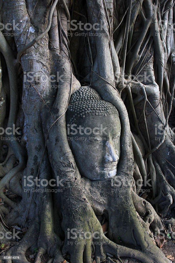 Buddha Head in Tree roots, Ayudthaya old city of Thailand. stock photo