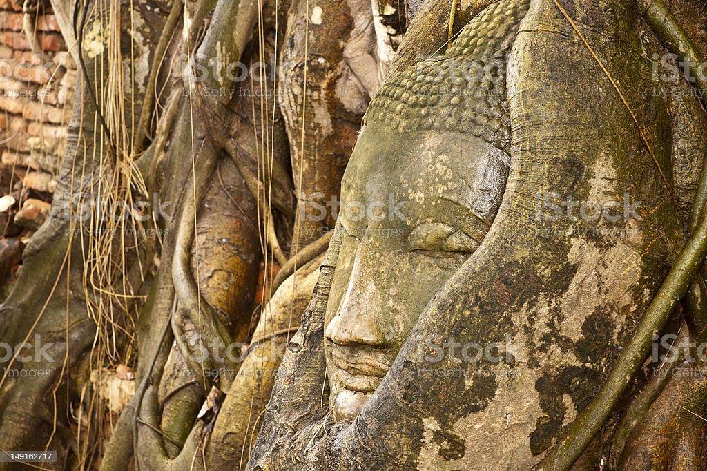 Budda Głowa w korzenie drzew zbiór zdjęć royalty-free