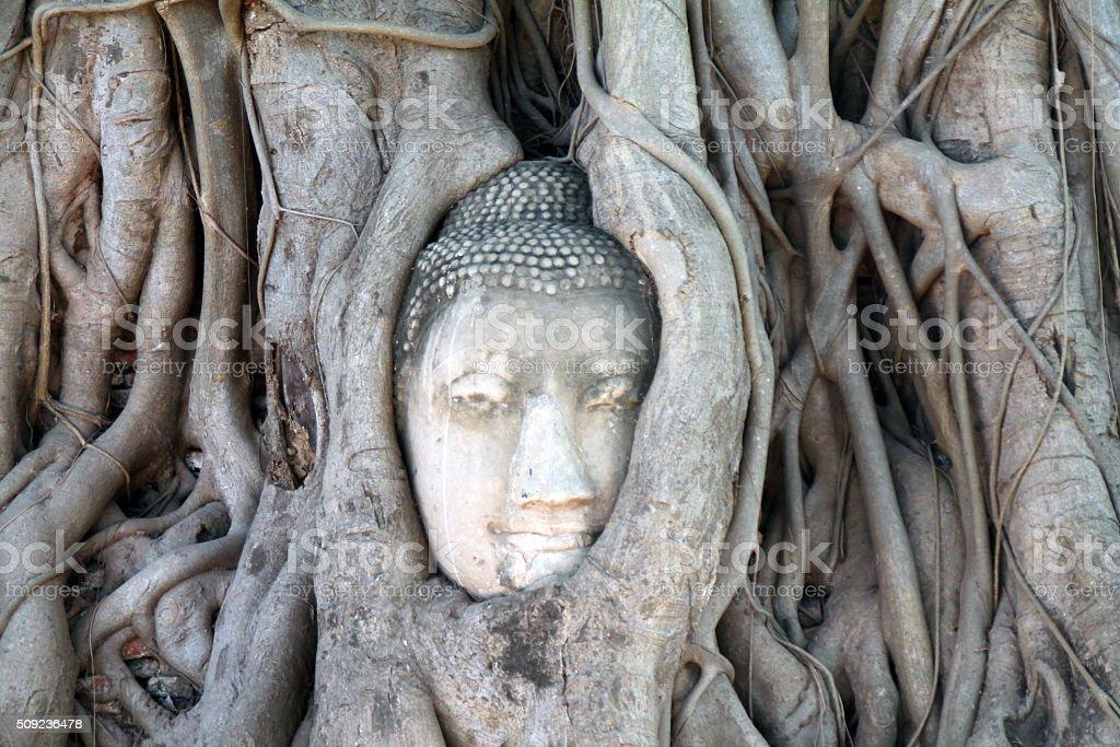 """Tête de Bouddha dans le temple de Wat Mahathat, des racines d """" arbres, à Ayutthaya en Thaïlande photo libre de droits"""