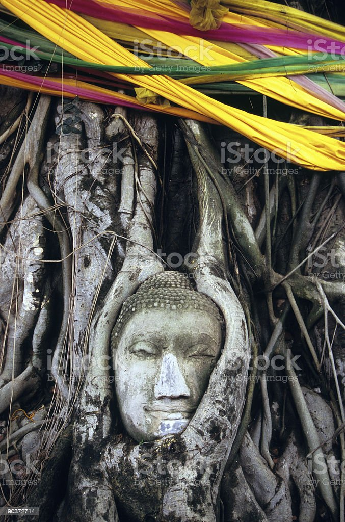 Buddha head overgrown by fig tree, Ayutthaya, Thailand royalty-free stock photo
