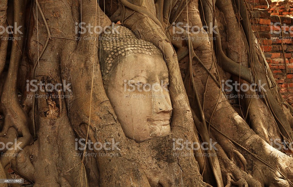 Buddha head stock photo