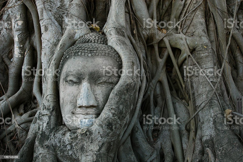 Buddha Head Surrounded by Roots royalty-free stock photo