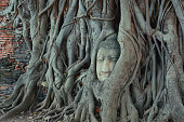 buddha head trapped in bodhi tree roots