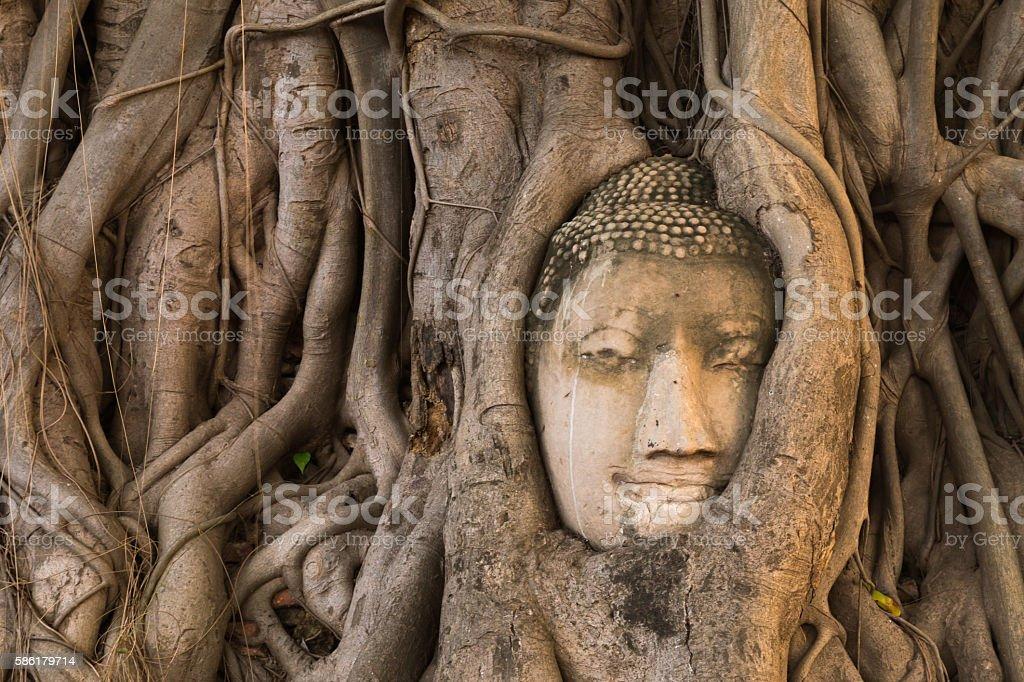 buddha head tree roots covered at Wat Mahathat,  Ayutthaya, Thailand stock photo