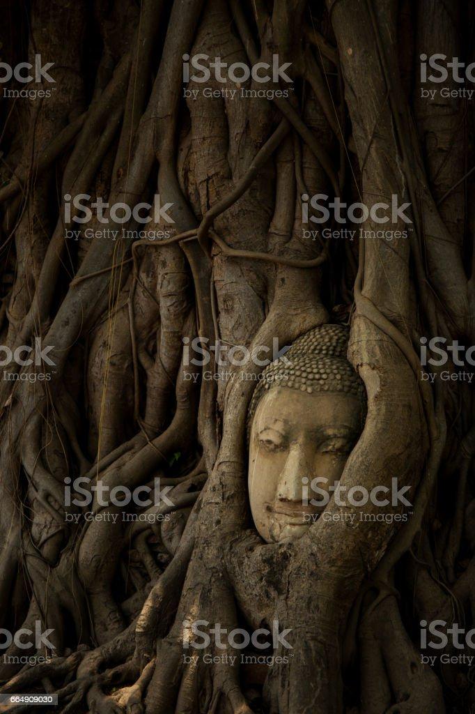 Buddha Image Head stock photo