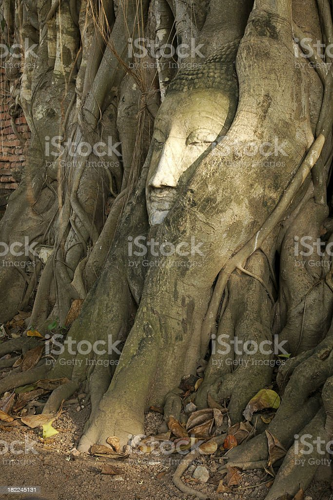 Buddha Monuments Face and head in the Tree Ayuttaya Thailand royalty-free stock photo