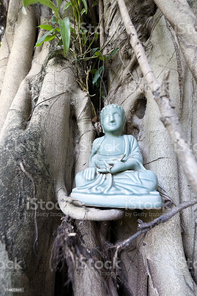 Buddha statue in Bodhi tree Hmong Thailand stock photo