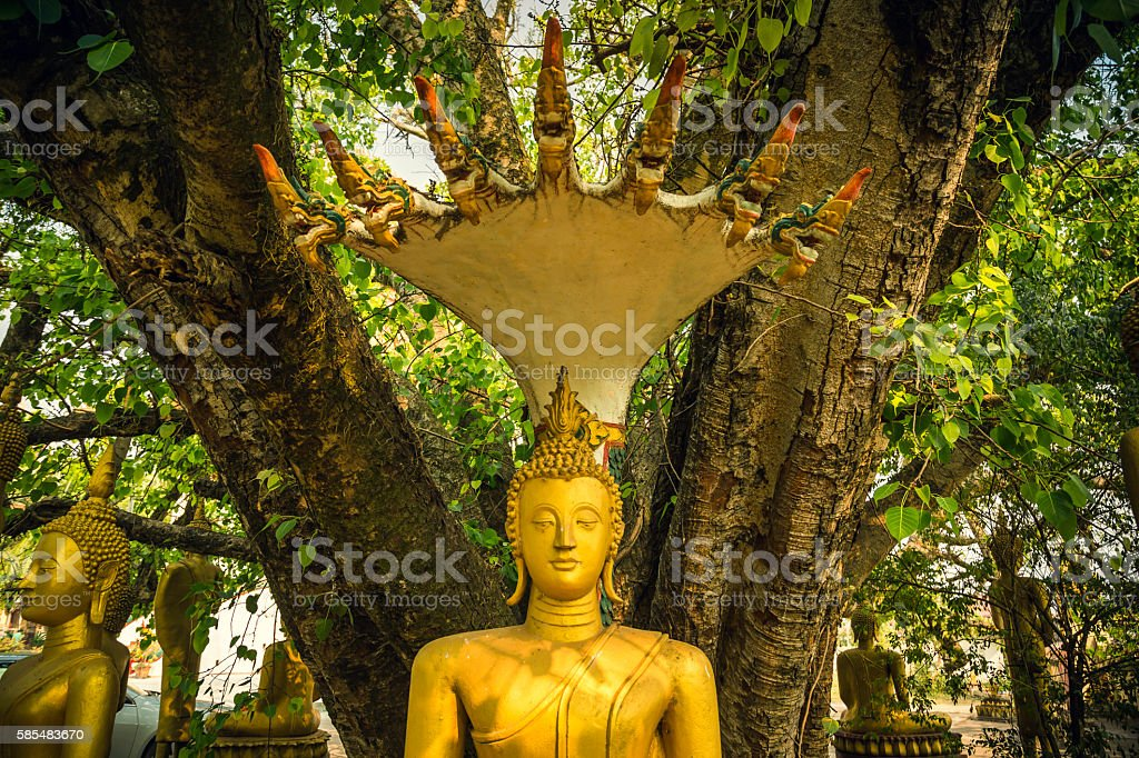 Buddha Statue That Luang Temple stock photo