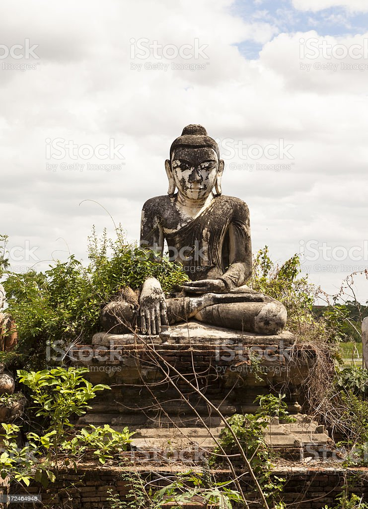 Buddha Tangled in Vines royalty-free stock photo